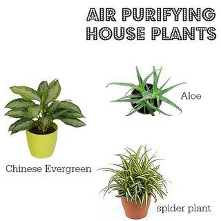 3-INDOOR PLANT SET