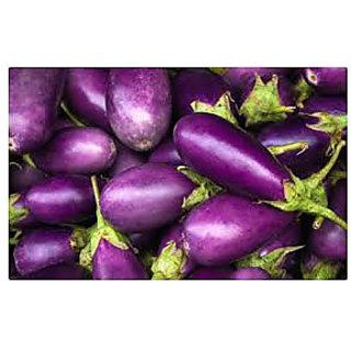 Vegetable Seed  Brinjal Seeds For Kitchen Garden With Natural Fertilizer