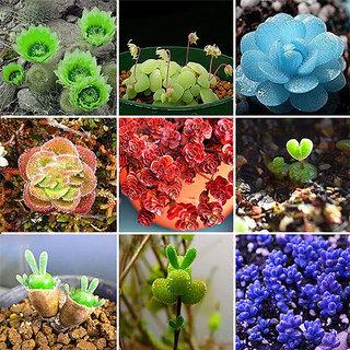 Succulents Fresh Seeds Mixed Rare Potted Plant Home Garden Decor Cactus