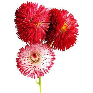 Futaba Gerbera seeds - Pink - 50 Pcs