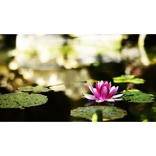 Tallenge - Floral Art - Pond With Water Lilie - Large Size Unframed Rolled Digital Art Print On Photographic Paper For Home And Office Decor (14x24 Inches)