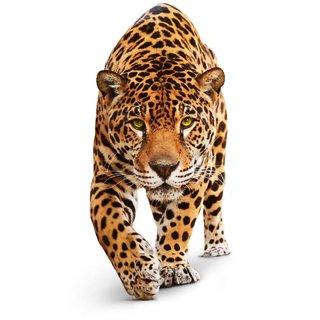 Tallenge - Stalking Leopard - Small Size Unframed Rolled Digital Art Print On Photographic Paper For Home And Office Decor (10x12 Inches)
