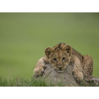 Tallenge - Cute Cub In Green Field - Small Size Unframed Rolled Digital Art Print On Photographic Paper For Home And Office Decor (9x12 Inches)