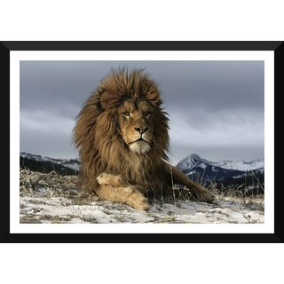 Tallenge - Asian Lion Resting - Medium Size Ready To Hang Framed Digital Art Print On Photographic Paper For Home And Office Decor (12x18 Inches)