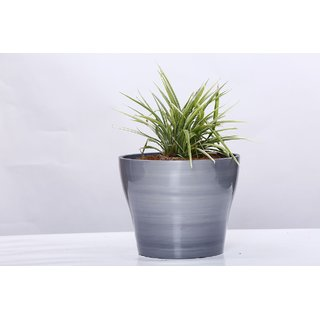 AgriLabh Plastic Rubber Acrylic Patented Planter (Charcoal)
