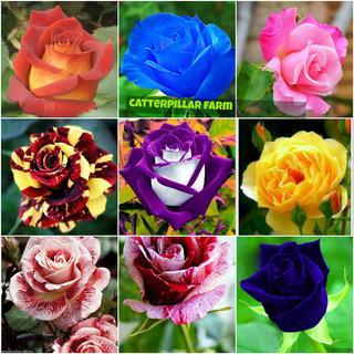 Buy Mixed Rose Flower 20 Seeds Home Garden Flower Seeds Rarest