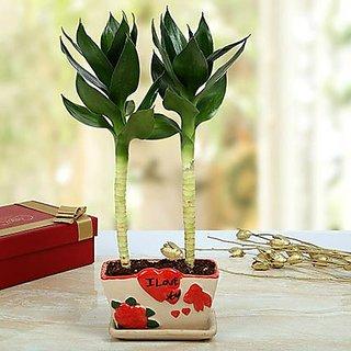 Romantic Lotus Bamboo