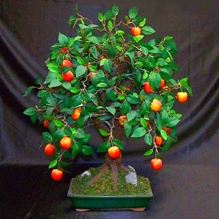 Futaba Mini Apple Fruit Bonsai Seeds - 30 Pcs