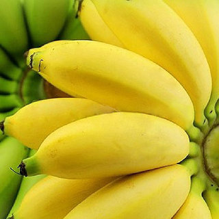 Futaba Rare Exotic Bonsai Banana Seeds - 100 Pcs