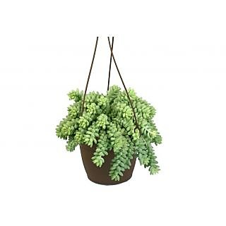 Hanging Hair Plant