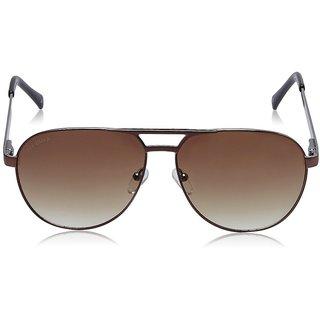 Joe Black JB-736-C2 Brown Aviator Sunglasses