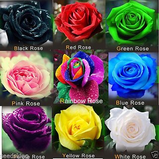 0a01e1eff90852 Buy ROSE flower 9 DIFFERENT COLOURS 5 SEEDS EACH (45 seeds) Online - Get  53% Off
