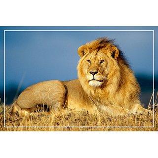 Printinggali : Babbar Sher - Lion Posters