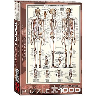 Skeletal System (Chart) - 1000 Piece Puzzle