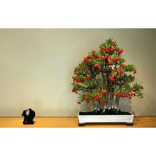 Bonsai Tree ForHome Firethorn Bonsai Seeds (Pack Of 5) Bonsai Good For Indoor-by Creative Farmer
