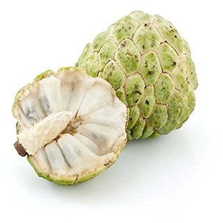Custard Apple Fruit Seeds- Annona Squamosa - Sugar Apple Sweet Fruit Seeds - 20 Seeds for Growing by Creative Farmer
