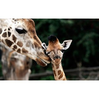 MYIMAGE Beautiful  Animal Poster (Paper Print, 12x18 inch)