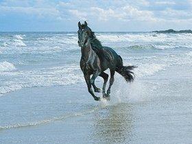 MYIMAGEBlack Horse Running at Beach Poster (Paper Print, 12x18 inch)
