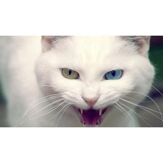 MYIMAGE Beautiful White Cat Poster (Paper Print, 12x18 inch)