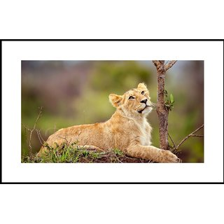 MYIMAGE Beautiful Tiger Digital Printing  Framed Poster (13.0 inch x 19.0 inch)