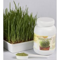 Organic Wheatgrass Powder- 100 Gm Pack, For 1 Month, Very Economical