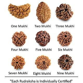Certified One To Nine Mukhi Rudraksha Bead