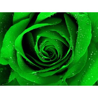 Rose Flower seed - Green Rose seeds - Pack of 20  seeds