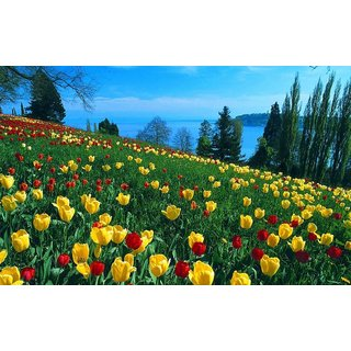 MYIMAGE Natural Scene of Beautiful flowers Poster (Canvas Cloth Print, 31cm x 46 cm)