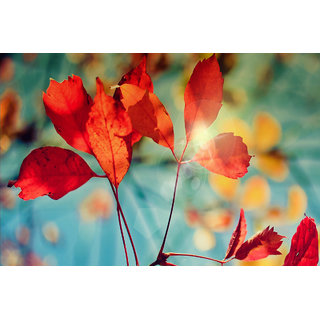 MYIMAGE Glare of Autumn Nature Poster (Canvas Cloth Print, 12x18 inch)