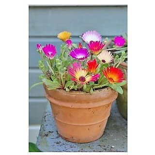 Flower Seeds : Pebble Plant Pot Variety Organic Seeds Garden Home Garden Seeds Eco Pack Plant Seeds By Creative Farmer