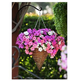 Flower Seeds : Petunia Grandiflora Rose Variety Seeds For Basket Flower Seeds For All Season (19 Packets) Garden Plant Seeds By Creative Farmer