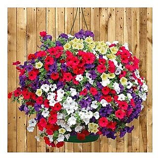 Flower Seeds : Petunia-Mixed Home Gardening Seeds Live Plant Seeds Garden Home Garden Seeds Eco Pack Plant Seeds By Creative Farmer