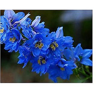 Flower Seeds : Delphinium Consolida Giant Imperial Mix Garden Seeds Garden Home Garden Seeds Eco Pack Plant Seeds By Creative Farmer