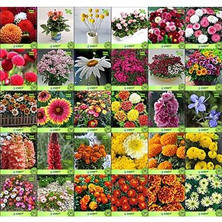 Flower Seeds : Plant Seeds Of Flowers Combo of 30 Packet of Seeds Garden Flower Seeds Pack By CreativeFarmer