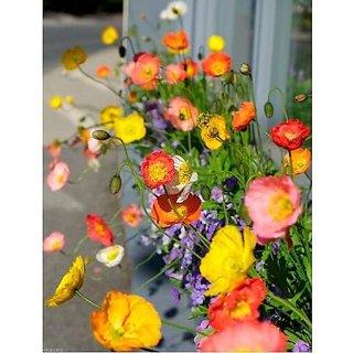 Flower Seeds : Khas-Khas Flower Seeds For Rainy Season Flower Seeds For Office Garden Home Garden Seeds Eco Pack Plant Seeds By Creative Farmer
