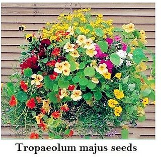 Flower Seeds : Nasturtiums Climbing Plants Flower Plants Seeds For Terrace And Kitchen Gardening Garden Home Garden Seeds Eco Pack Plant Seeds By Creative Farmer