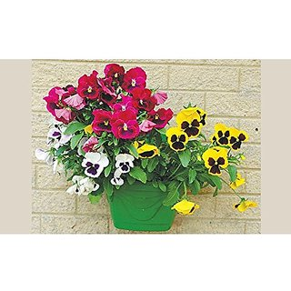 Flower Seeds : Pansy Yellow And Red Mix Seeds Garden Herge Garden Home Garden Seeds Eco Pack Plant Seeds By Creative Farmer