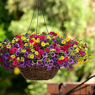 Flower Seeds : Petunia Hybhid Mixed Flower Seeds Flower Seeds Easy To Grow Seeds For Terrace And Kitchen Gardening Garden Home Garden Seeds Eco Pack Plant Seeds By Creative Farmer