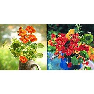 Flower Seeds : Nasturtium Orange Mix Flower Seeds Packets ProfessionalPack Garden Home Garden Seeds Eco Pack Plant Seeds By Creative Farmer