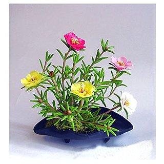 Flower Seeds : Portulaca Grandiflora Double Mix Organic Garden Garden Home Garden Seeds Eco Pack Plant Seeds By Creative Farmer