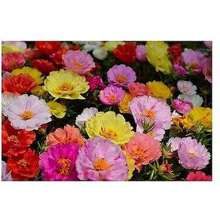 Flower Seeds : Time Flower Succulents Seeds Garden Seeds (15 Packets) Garden Plant Seeds By Creative Farmer