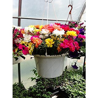 Flower Seeds : Best Succulents For Hanging Pot Flower Seeds For India Seeds For Germination Garden Home Garden Seeds Eco Pack Plant Seeds By Creative Farmer