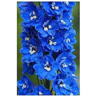 Flower Seeds : Delphinium Blue Heirloom Seeds (14 Packets) Garden Plant Seeds By Creative Farmer