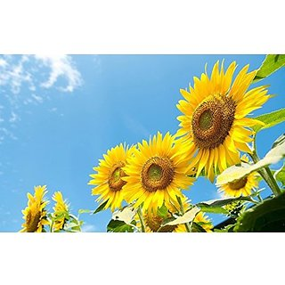 Flower Seeds : Cut Flower Sunflower Seeds Go Green Garden Home Garden Seeds Eco Pack Plant Seeds By Creative Farmer
