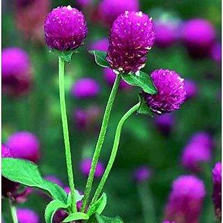 Flower Seeds : Rakthamallika Seed Packets Flower Seeds For All Season (25 Packets) Garden Plant Seeds By Creative Farmer