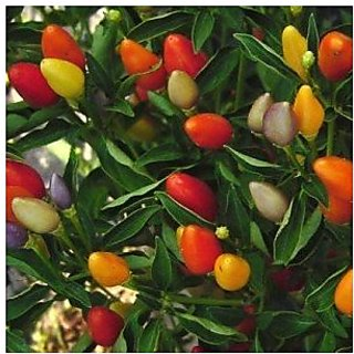 Ornamental Seeds : Ornamental Chillies Seeds For Railing Planter (18 Packets) Garden Plant Seeds By Creative Farmer