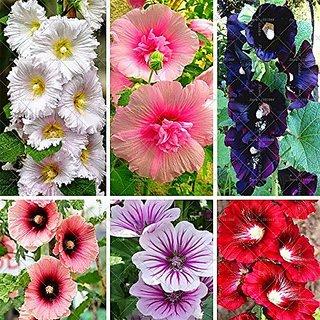 Flower Seeds : Hollyhocks-Powderpuff Dbl Mix Flower Seeds For Summer Garden Home Garden Seeds Eco Pack Plant Seeds By Creative Farmer