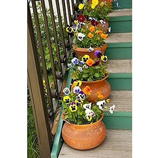 Flower Seeds : Pansy Melanium Garden Seeds Of Flowers Terrace Garden Seeds Garden Home Garden Seeds Eco Pack Plant Seeds By Creative Farmer