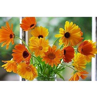 Flower Seeds : Gul-E-Ashrafi Garden Hedge Garden Home Garden Seeds Eco Pack Plant Seeds By Creative Farmer