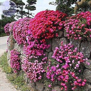 Flower Seeds : Burf-Heavens Mixed Garden Seeds (20 Packets) Garden Plant Seeds By Creative Farmer